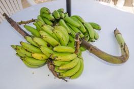 Our Garden - Fruit Tree-9532