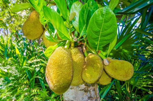 Our Garden - Fruit Tree-9668